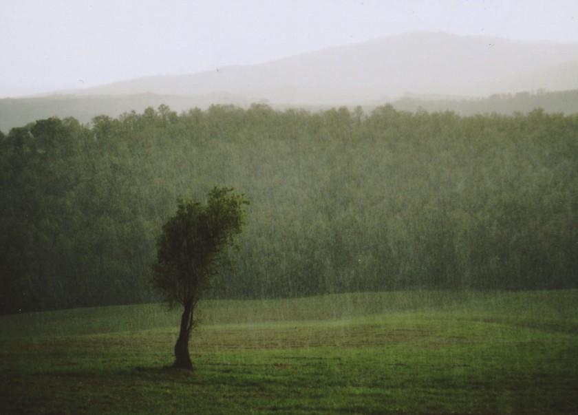 albero_QUAD_sito